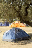 Blue tent for the rest of the tree. Stock Images