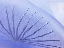 Blue Thread work background cloth Stock Images