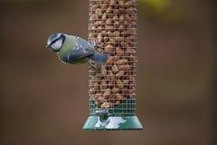 Bird on feeder Royalty Free Stock Photos