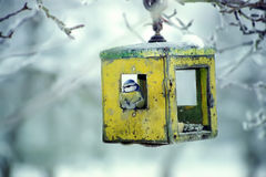 Blue tit in bird table. Typical winter garden view Stock Images
