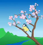 Blue Tit on flowering branch. Spring background with blue tit on a blossoming branch. Vector illustration Stock Photography
