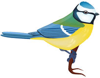 Blue Tit. Vector illustration of a Blue Tit bird Royalty Free Stock Photography