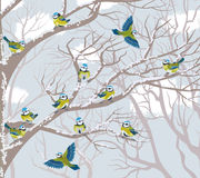 Blue tits Royalty Free Stock Images
