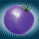 Blue Tomatoe with background Royalty Free Stock Photo