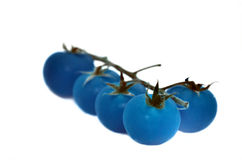 Blue Tomatoes. Shot in high-key Royalty Free Stock Photography