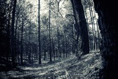 Blue toned forest landscape. Blue toned daylight forest landscape background photo Stock Photos