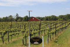 Blue Tooth Vineyard in Napa Valley Royalty Free Stock Photo