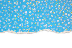Blue torn paper with floral pattern Royalty Free Stock Image