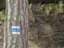 Blue touristic mark trail sign on spruce tree trunk forest, rock. And fern background, selective focus Royalty Free Stock Image