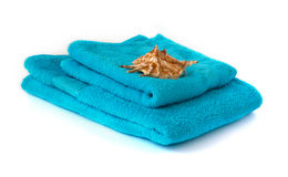 Blue towel with seashell Royalty Free Stock Photography