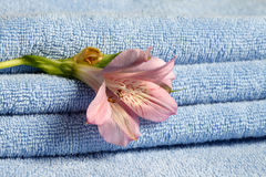 Blue towels with flower Stock Photo