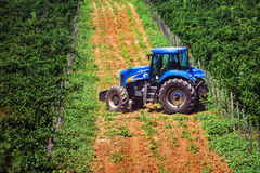 Blue tractor among vineyards during summertime stock images