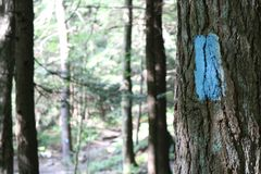 Blue Trail Blaze. A blue trail blaze while hiking a trail through the woods Royalty Free Stock Photo