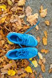 Blue trainers on colorful leaves on the ground. Autumn nature. Top view stock photography