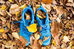 Blue trainers on colorful leaves on the ground. Autumn nature. Top view Stock Photo