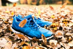 Blue trainers on colorful leaves on the ground. Autumn nature Royalty Free Stock Photography