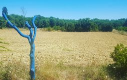 Blue tree in Boisset-et-Gaujac. Cute place with beautifull tree in country Royalty Free Stock Images