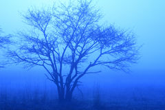 Blue Tree in Mist. A tree enshrouded in blue mist in a meadow in Japan Stock Photos