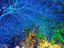 Blue tree royalty free stock photography
