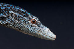 Blue tree monitor Royalty Free Stock Photography