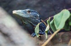 Blue Tree Monitor Stock Photo
