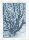Blue tree print. Dry point print of a tree in blue ink Royalty Free Stock Photos