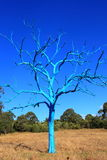 Bare blue tree in park with blue sky Stock Photos