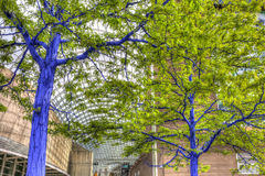 Blue Trees in Downtown Denver Royalty Free Stock Photos