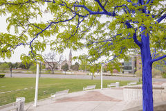 Blue Trees in Downtown Denver Stock Photos