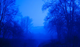 Blue Trees. The blue moment before dark Stock Photography
