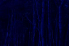 Blue trees Royalty Free Stock Images