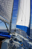 Blue Trimmed Sails. On a calm day on the bay Stock Images