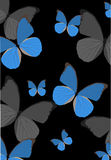 Blue tropical butterfly background Royalty Free Stock Images