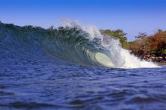 Blue tropical coast surfing wave Stock Photography