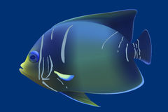 Blue tropical fish. Royalty Free Stock Photography