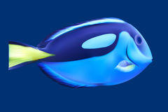 Blue tropical fish. Royalty Free Stock Photo