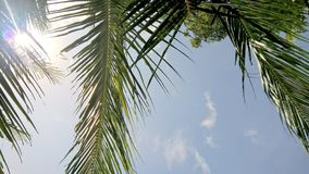 Blue tropical sky with coconut leaves Royalty Free Stock Photography