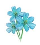 Blue tulip watercolor flower. Image illustration. Tulip blue Royalty Free Stock Photos