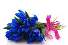 Blue tulips Royalty Free Stock Photography