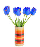 Blue tulips flowers with yellow stripes, colored flowerpot, vase Royalty Free Stock Photo