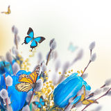 Blue tulips with mimosa and butterfly Stock Images
