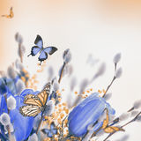 Blue tulips with mimosa and butterfly Stock Photos