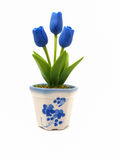 Blue tulips in white potted Royalty Free Stock Photos
