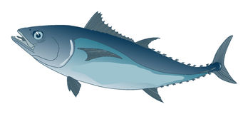 Blue tuna Royalty Free Stock Photo