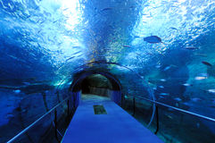 Blue tunnel. Tunnel of glass with fishes inside stock image