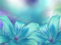 Blue- turquoise lilies flowers, on turquoise-purple-blue blurred background . Closeup. Bright floral composition card for the holiday. Nature stock photo