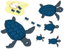 Blue turtles set. Set of blue turtles illustrations, from eggss to adults, and in various swimming positions Royalty Free Stock Photos
