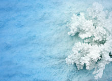 Blue Under water background. With coral Stock Images