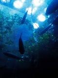 Blue Underwater Marine Landscape Stock Photo