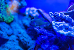 Blue underwater world Royalty Free Stock Photography